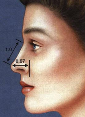 طول بینی